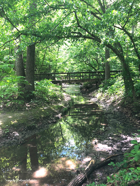 A bridge crosses a meandering stream in the dense forest of Platte River State Park.