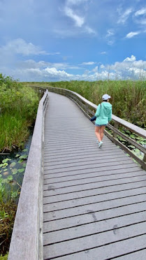 boardwalk trails in everglades