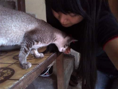 Download 95+  Gambar Kucing Lokal Lucu Terbaru HD