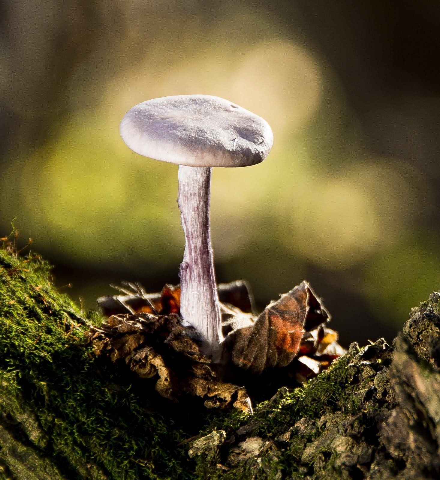 apró gombák férgek a gyermekek inkubációs periódusában