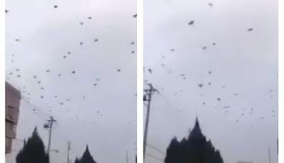 Ribuan burung gagak serbu kota Wuhan, China