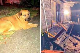 Dog Runs Inside As House Is Covered In Flames, Wakes Up Dad And Saves His Life