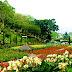 Tips untuk memilih bunga-bunga segar dan indah