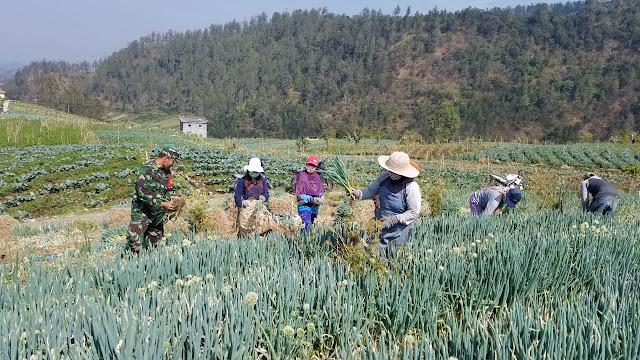 KodimKaranganyar - Semangat Babinsa Bersama Petani Sayur
