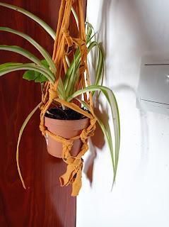 planta-colgante