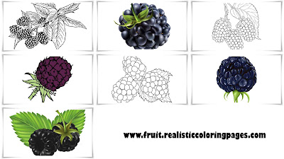 free 7 awesome blackberry fruit clipart