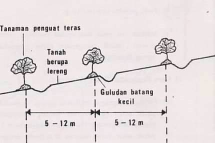 Teras Kridit (ridge terrace)