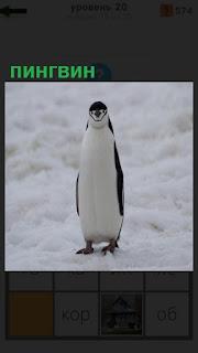 на снегу стоит одинокий пингвин