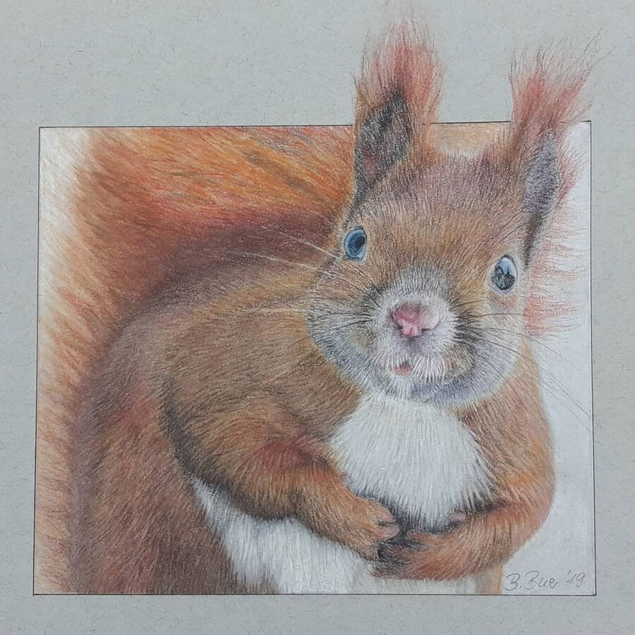 08-Curious-red-squirrel-Bianca-Buer-www-designstack-co