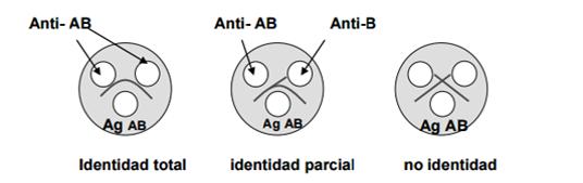 leucopoyesis e infección parasitaria por gusanos