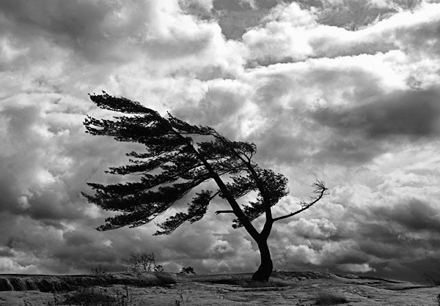 صور الطبيعة مع الرياح