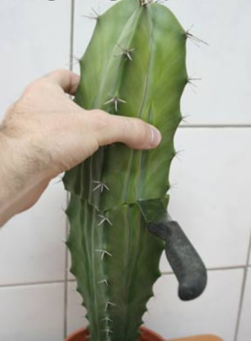agrowisata lembang berupa paket budidaya kaktus