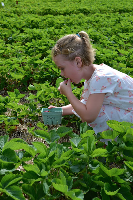 Strawberry picking, picking strawberries, field trips for kids, field trip ideas