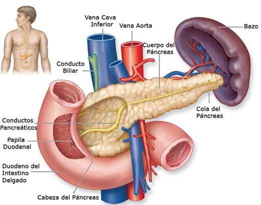 Se dice Médico: Fisiopatologia de la Diabetes Mellitus tipo 2