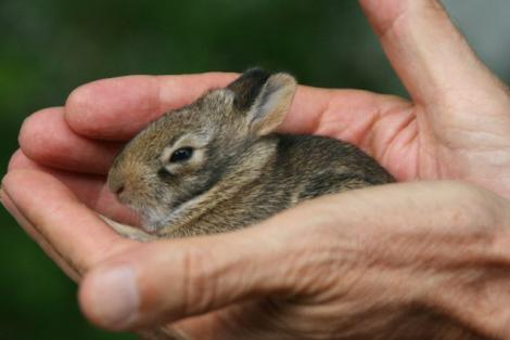 Sickles Market Blog Baby Rabbits In The House