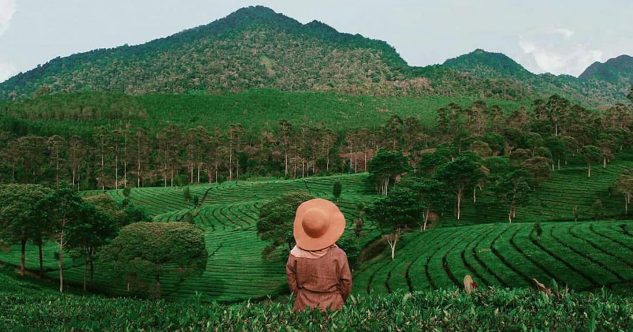 Asiknya Wisata Di Kebun Teh Sukawana Lembang