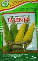 benih jagung talenta,jagung talenta,budidaya jagung manis,benih jagung manis,pertanian,lmga agro