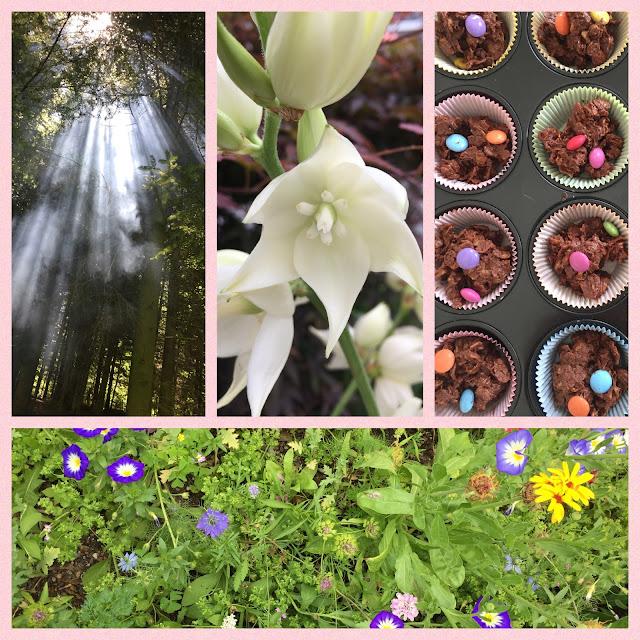 Sonnenstrahlen im Wald, Blumen im Vorgarten, Cornflakes Knusperli
