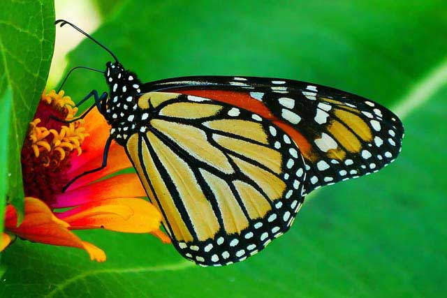 Fascinating butterfly tactics that can help your life grow