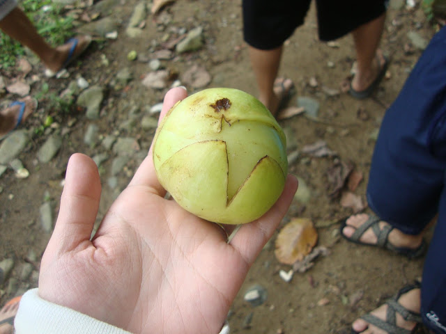 Catmon fruit unopened