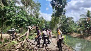 """Membahayakan Pengguna Jalan, SAR Yon C Pelopor """"Sigap"""" Tebang 2 Pohon di Jalan Kinibalu"""