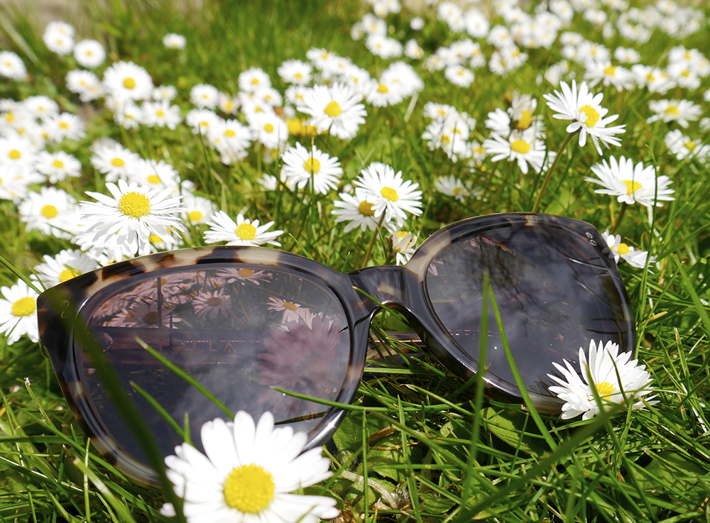 IOLLA Swinton tortoise shell sunglasses, IOLLA glasses, filed of daisies,  oversized tortoishell catseye sunglasses