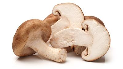 Biobritte Mushroom Research Center and Fungi School