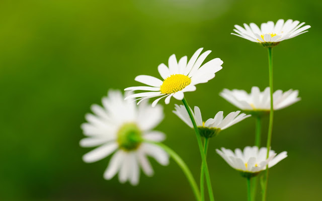 Flower-Facebook-Cover-Image-HD