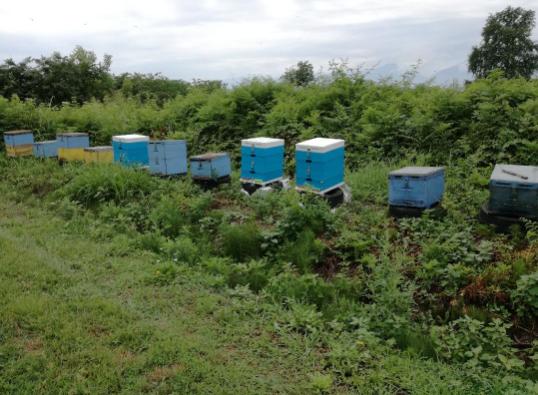Το μικρό μας μελισσοκομείο ΝΙΚΟΥ ΔΗΜΗΤΡΙΟΣ και ΓΙΩΡΓΟΣ ΤΕΖΕΨΙΔΗΣ στην Επισκοπή Νάουσας Ημαθίας