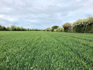 Kildare Commercial Development Land priced - confx.co.uk