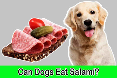 Can dogs eat salami, Can dogs have salami, Salami for dogs