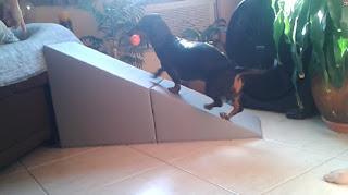 rampa para cães com lesão