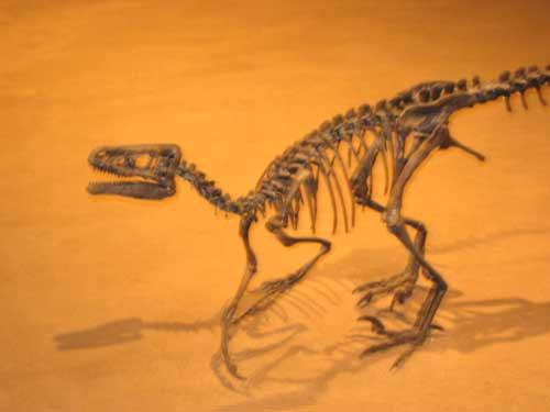 Dinosaurss
