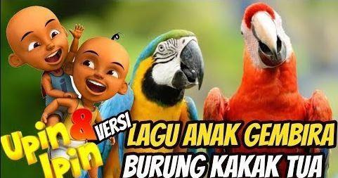 Download Lagu Upin Ipin Burung Kakak Tua Terbaru Mp3 Mp4 Gratis Download Upin Ipin Video