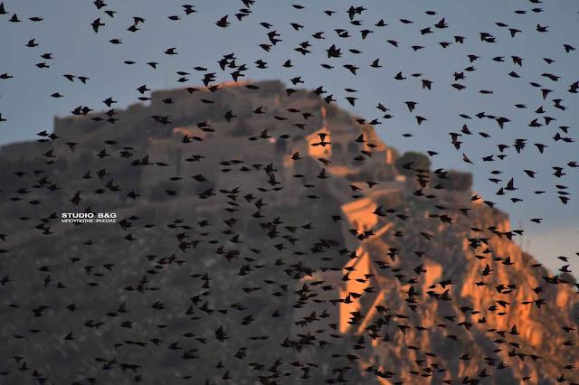 Χιλιάδες ψαρόνια κατακλύζουν τον ουρανό στο Ναύπλιο (βίντεο)