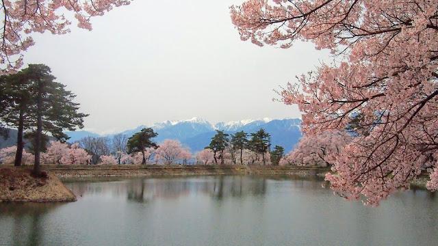 岡谷から天竜川沿いを下って伊那市へ。六道の堤と高遠城址の桜を見て杖突峠を越えて茅野まで走るサイクリングコース