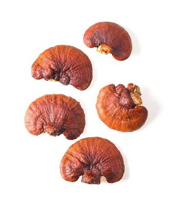 Ganoderma mushroom cultivation in Nagaland