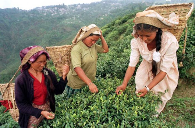 Salesian college Darjeeling and tea industry against trafficking in women