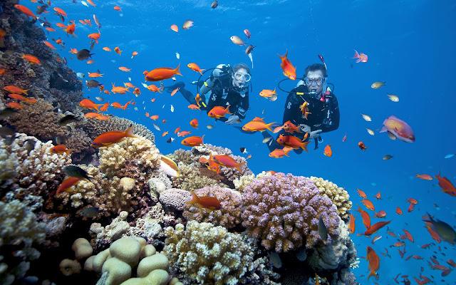 Bạn có thể lặn xuống từ 5 đến 10m và thường có thợ lặn đi cùng. Giá khoảng 600k cho 1 lần lặn.