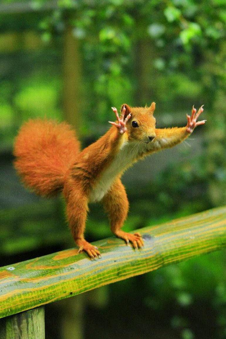 Funny squirrel picture