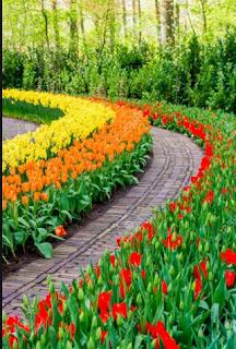 Mimpi Melihat Bunga Warna Warni
