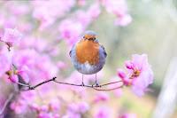 beautiful bird bloom