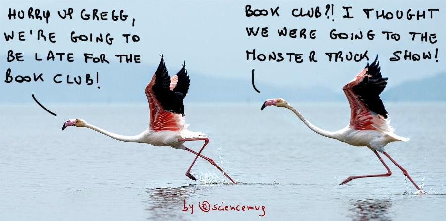 Two flamingos runnnig on water (by @sciencemug)