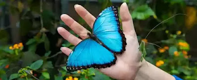 Why make so much of fragmentary blue In here and there a bird, or butterfly, Or flower, or wearing-stone, or open eye, When heaven presents in sheets the solid hue?