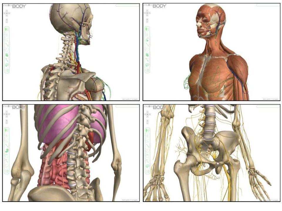 Savvy Secondary Science Zygote Body 3d Anatomy Viewer