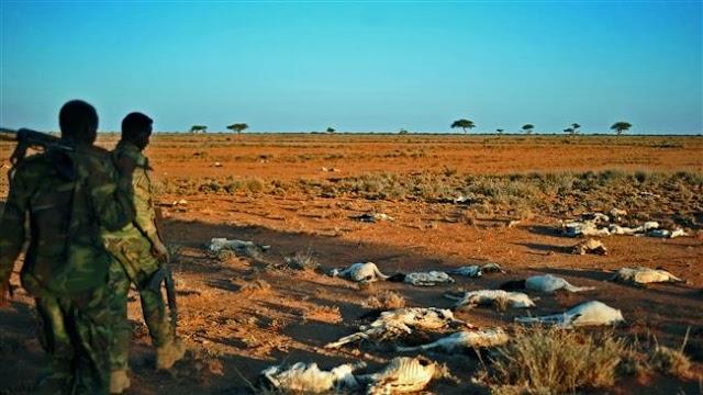 Somalia's President Mohamed Abdullahi Farmajo declares 'national disaster' amid drought