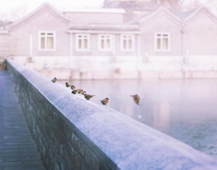 photographie d'oiseaux sur un pont