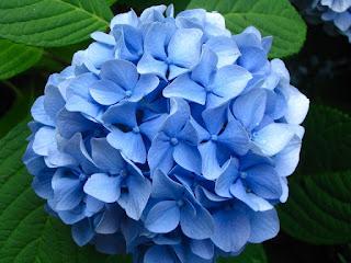 Цветы, соответствующие женским именам