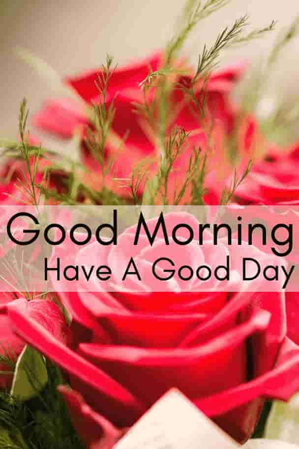 roses morning wishes