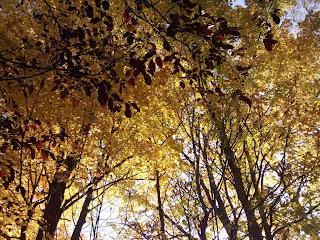 Bois-de-Belle-Rivière l'automne couleurs arbres feuilles